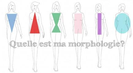 types de morphologies