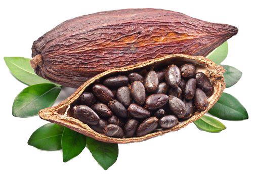 Nos5 gommages corporelshomemade cacao